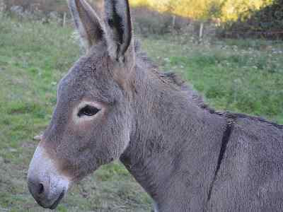 Pet Animals Name donkey