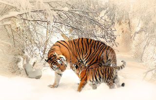 Animals Photos Gallery