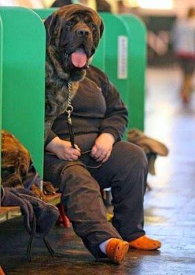 cão sentado esperando