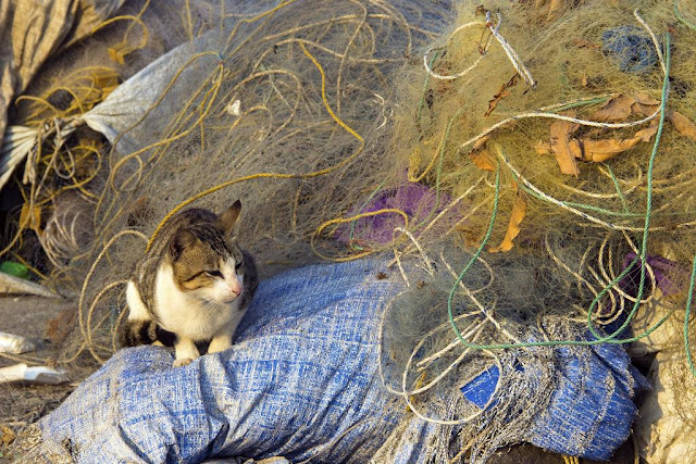 cat, fishing nets, colourful, worli, jetty, koliwada, mumbai, india, street, streetphoto, street photography,
