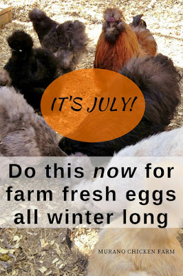 Chickens that lay eggs in winter