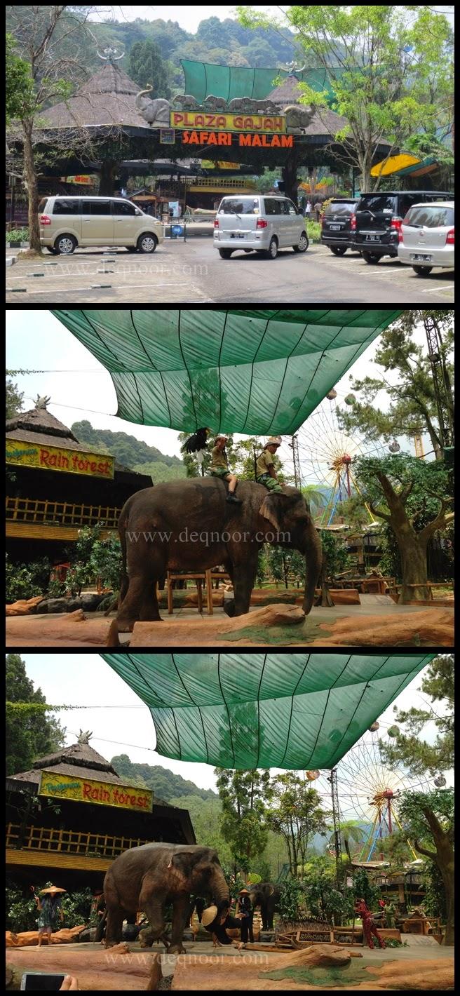 Elephant Show Taman Safari Indonesia 1