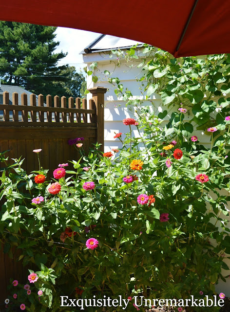 How To Grow Zinnias From Seeds
