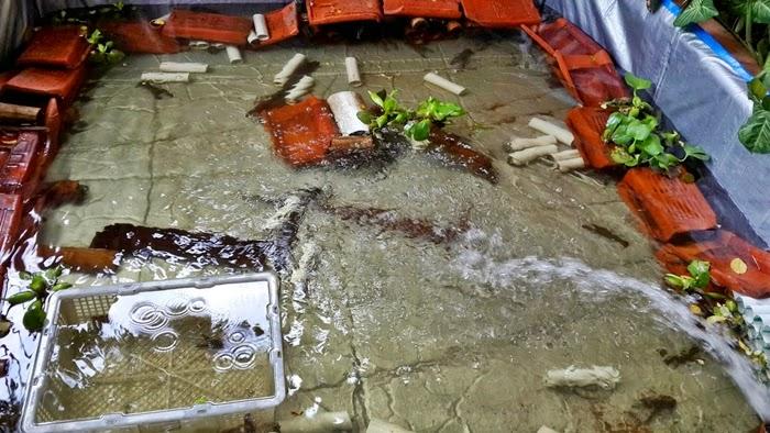 Peluang Budidaya Lobster Air Tawar Rumahan