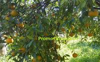 Logo Prova a vincere gratis 1 pacco di tarocco da spremuta e mandarini