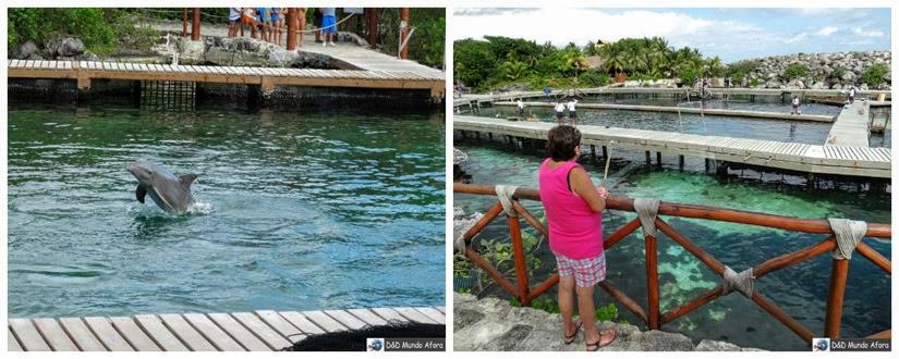 Onde nadar com golfinhos em Cancun Xel-Há Xcaret