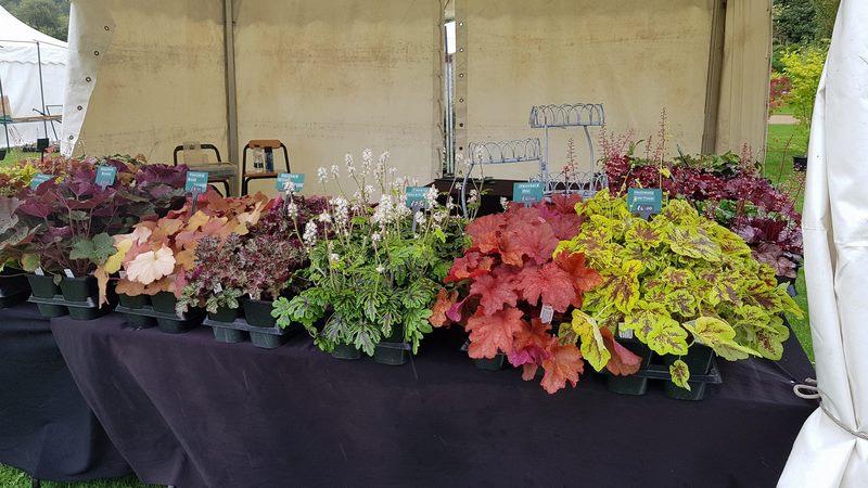 Heuchera, Heucherella y Tiarella RHS Garden Wisley Flower Show 2017