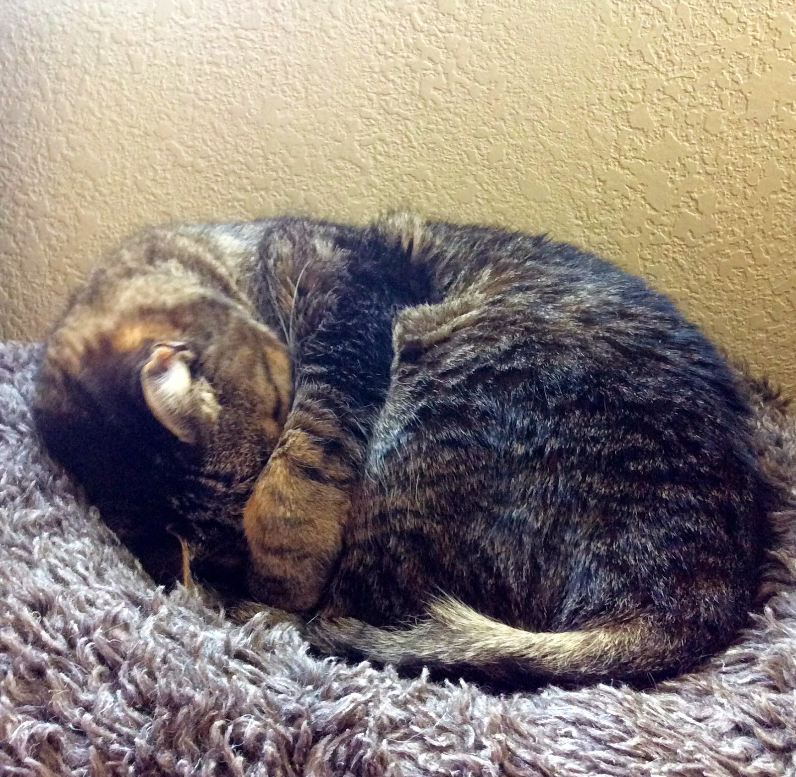 Eamon the cat curled up in his bed