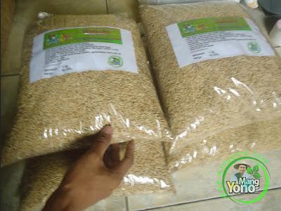 Usi / Tati Indramayu, Jabar  Pembeli Benih Padi TRISAKTI 75 HST Panen.  5 Kg atau 1 Bungkus.