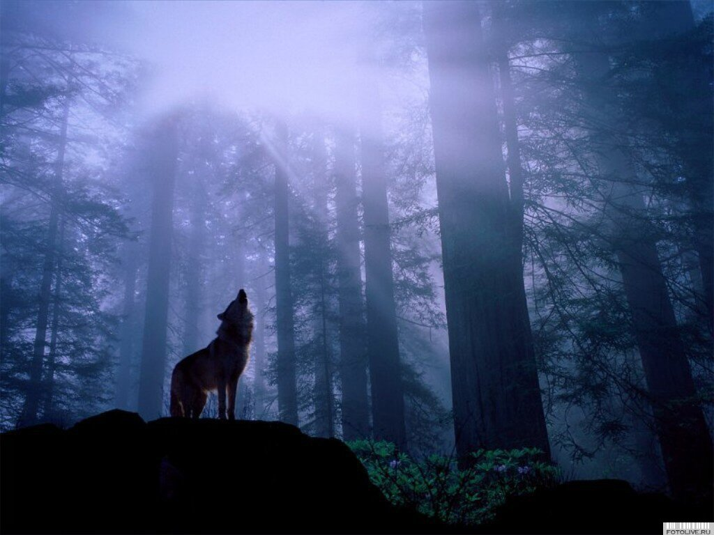 Wallpaper Me Wolf Howling At Moon Wallpaper