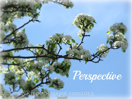 Crabapple blossoms, Blue Sky, Looking at the positive, Florals-Family-Faith, Cindy Rippe