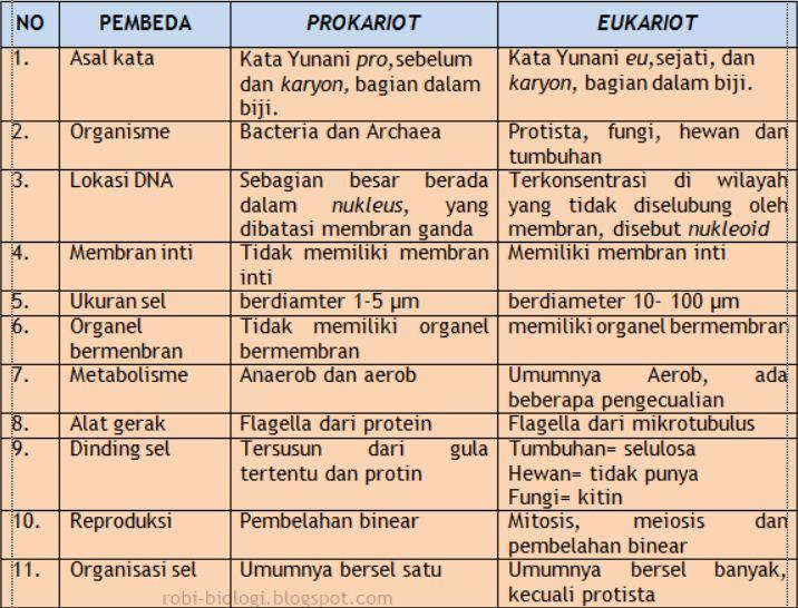 Jelaskan Perbedaan Antara Sel Prokariotik Dengan Sel Eukariotik Blog Pak Pandani