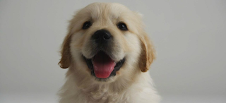 Έξι καταστάσεις που διαισθάνονται τα σκυλιά πριν από τον οποιονδήποτε