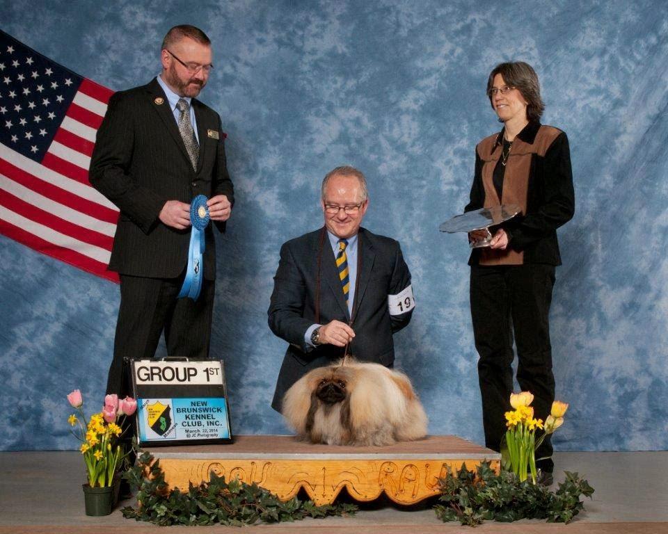 Dog Show Poop Familiar Faces Dominate Week