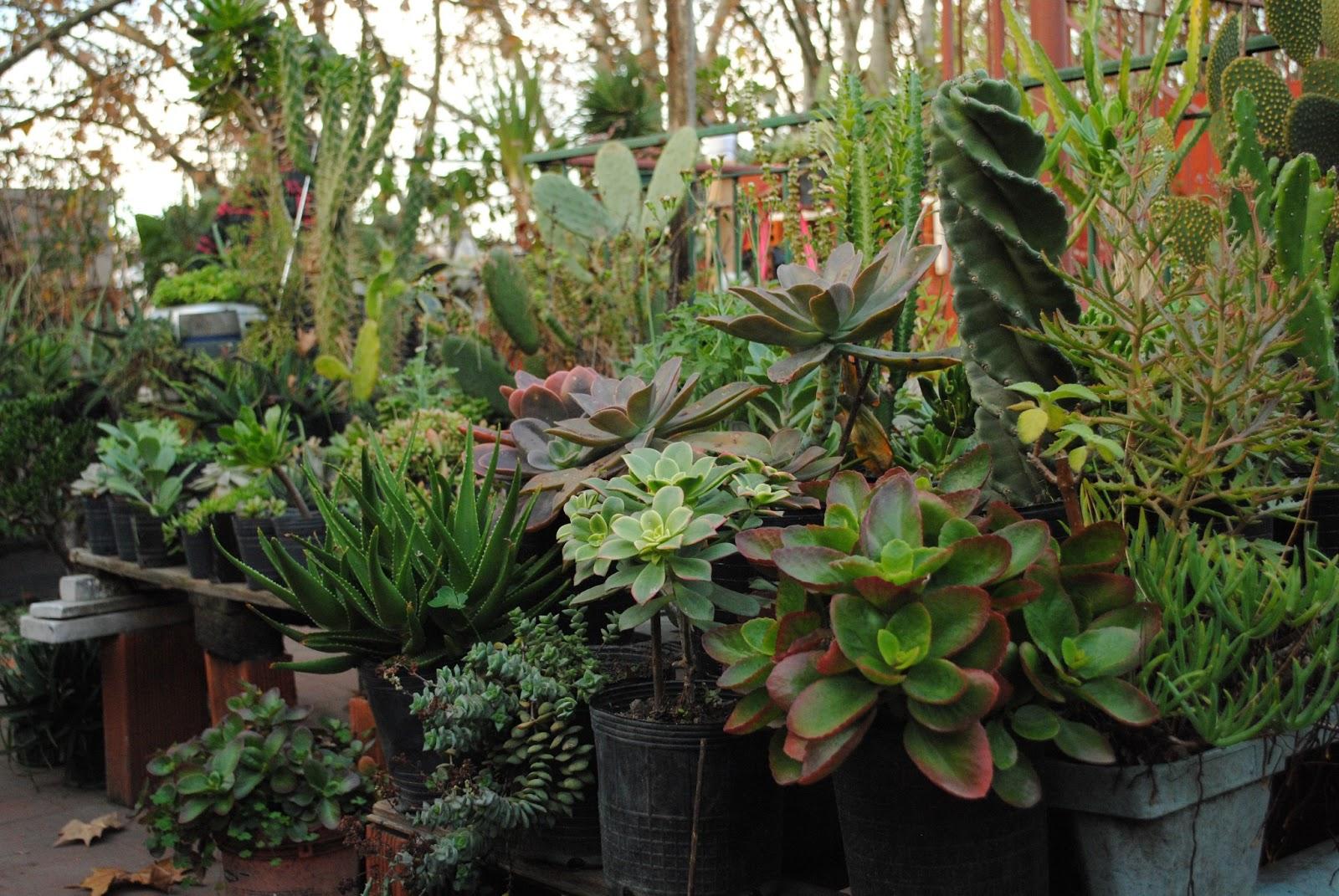 Plantas morenal bienvenid s a plantas morenal for Plantas suculentas colgantes