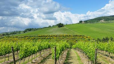 Tignanello one of Chianti's most famous vineyards