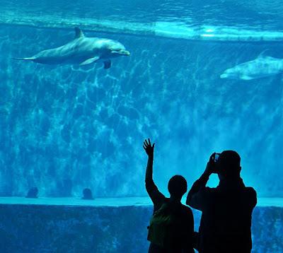 acquario village genova delfini