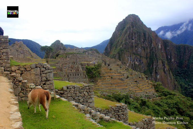 A llama grazes among the ruins of Machu Picchu, Peru. Photo: Shannon Kircher for TravelBoldly.com
