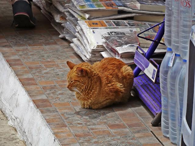 Koty na krecie jak żyją i jak mieszkają?