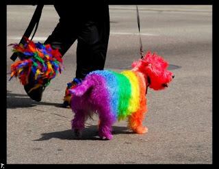 Perro pintado de colores