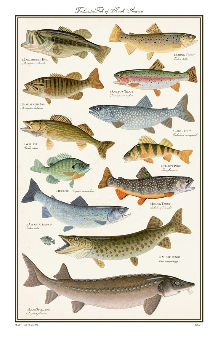 AbakusPlace: Freshwater fish species of North America