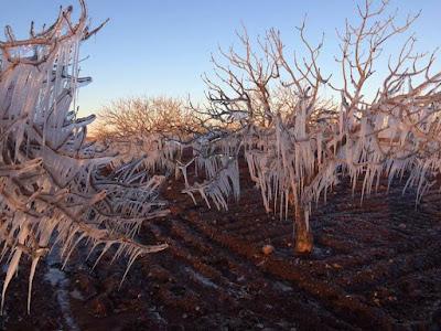 ağaçlar dondu
