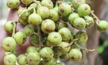 Village Food | Fig fruit fry | Grandmother recipes