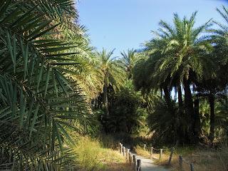 Kreta, Palm Beach