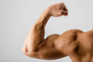 cara membentuk otot lengan bisep trisep