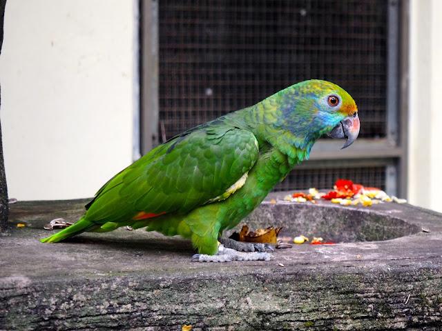 Parrot at the Bird Park, Kuala Lumpur, Malaysia