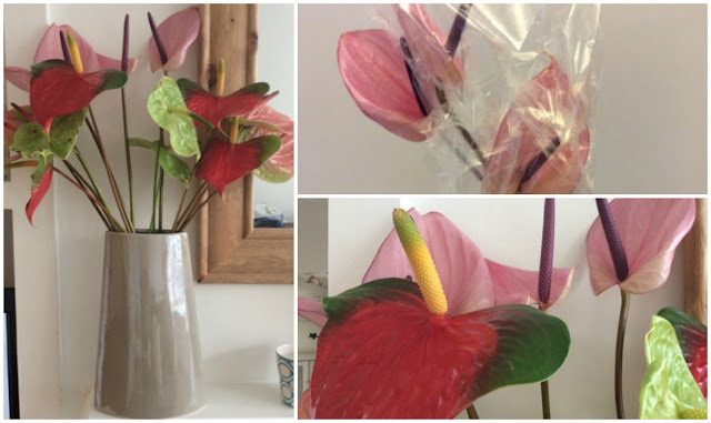 Anthurium collage