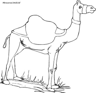 23+ Sketsa gambar hewan unta terbaru