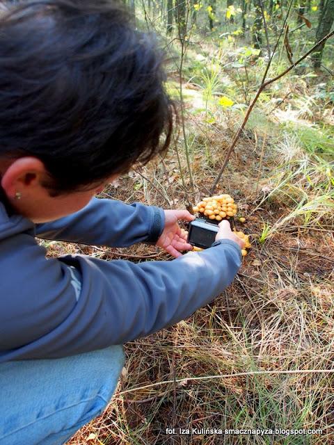dorota fotografuje grzyby, grzyby gatunkami, zdjęcia grzybow, moja menazeria, grzybobranie, ponidzie