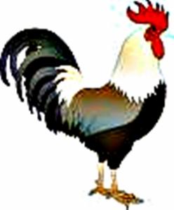 Tafsir Mimpi Ayam