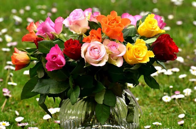 Cara Merawat Bunga Mawar yang Dapat Kamu Lakukan di Rumah, Mudah tanpa Repot