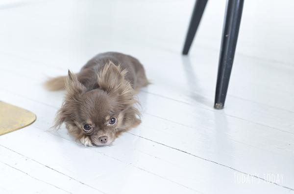 Koti koirien silmin   Today's today