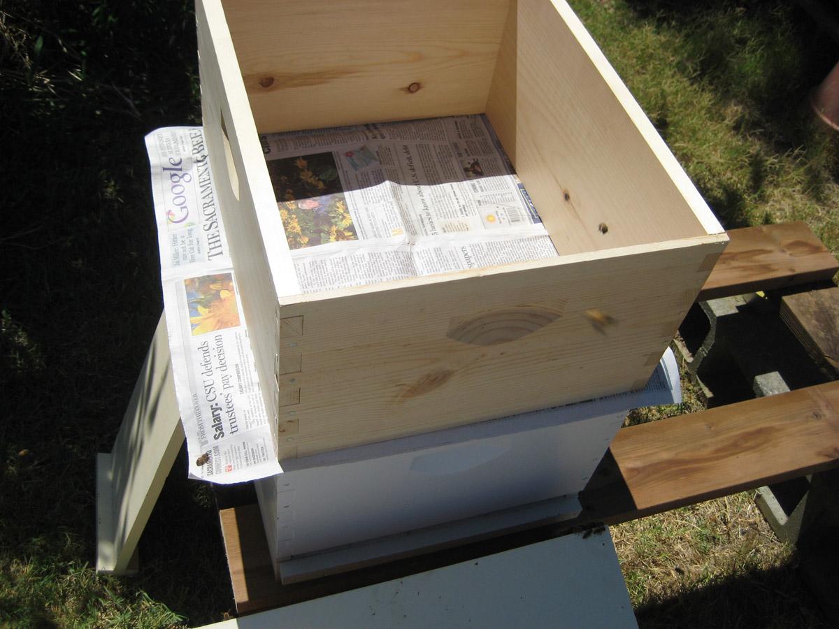daily wood job: Choice Perone beehive plans