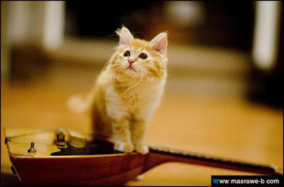 صور صور قطط كيوت 2020 خلفيات قطط جميلة جدا cats27.png