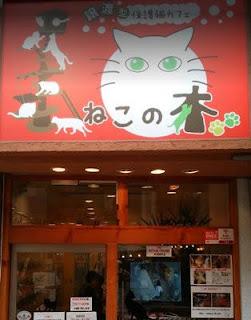 大阪の保護猫カフェ「譲渡型猫カフェ ねこの木」さん外観
