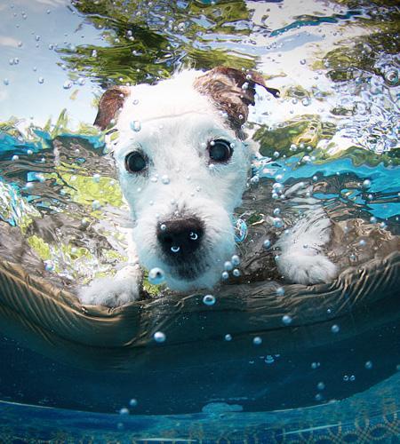 Striking Underwater Dogs