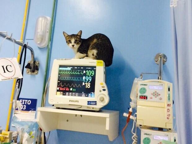 Gato prevê que 50 pacientes vão morrer