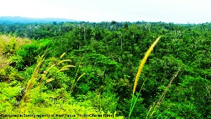 Birdwatching in Sorong forest of West Papua