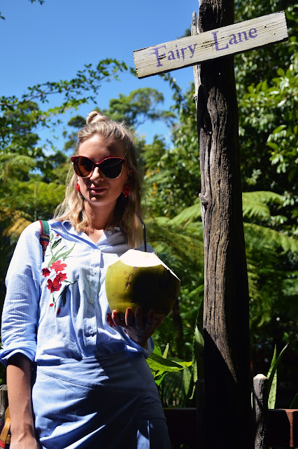 drinking a fresh coconut tropical far north queensland kuranda