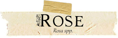 Magical and Medicinal Uses of Rose. Includes FREE BOS page!