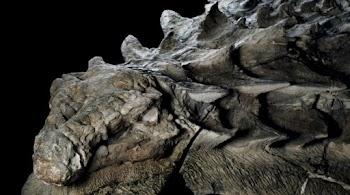 site γνωριμιών για τους δεινόσαυρους διαφυλετικός γνωριμίες σε Βοστόνη