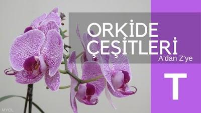 Orkide Çeşitleri T Harfi İle Başlayan Orkideler