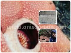 Sidang Tilang dan Bunga Rafflesia