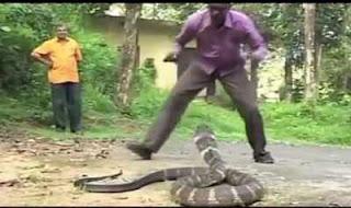 Arti mimpi digigit ular menurut primbon dan Buku mimpi