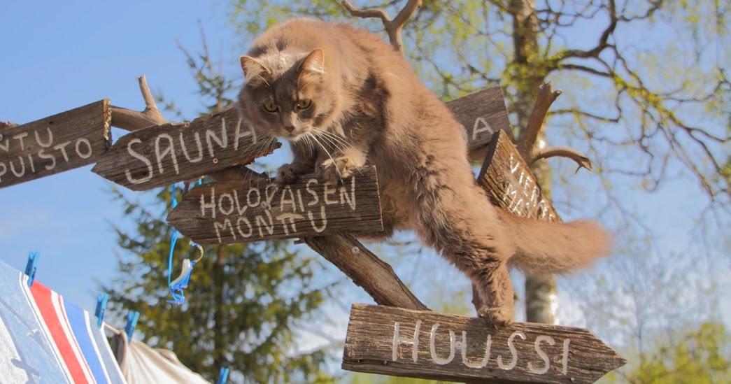 Kissa Puu