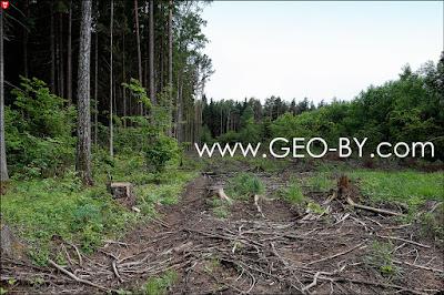 Свежая вырубка леса у бывшего 25 арсенала РВСН